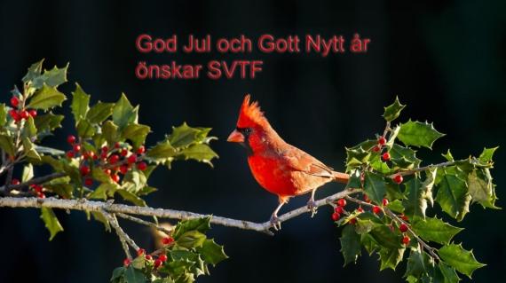 SVTF2020